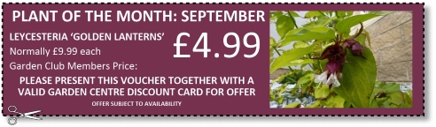 September Plant of the Month offer at Buckingham Garden Centre