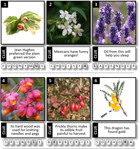 Identify the plants! Picture competition to win a £25 gift voucher for Buckingham Garden Centre