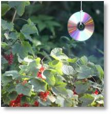 Use old CDs to scare birds from seed beds and young plants