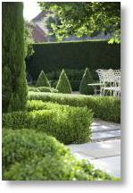 Box hedging is available from Buckingham Nurseries