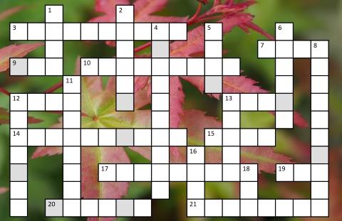 Buckingham Garden Centre's crossword November/December 2018