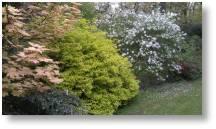 Evenley Wood Garden, a lovely venue to visit close to Buckingham Garden Centre
