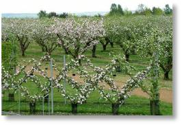 Gery Edward's favourite orchards