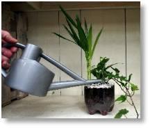 Junior Garden Club - create your own bottle garden