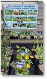 Water plants available at Buckingham Garden Centre