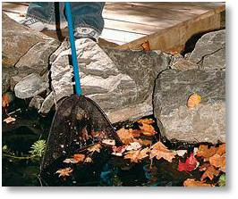Clear your pond of leaves before Winter