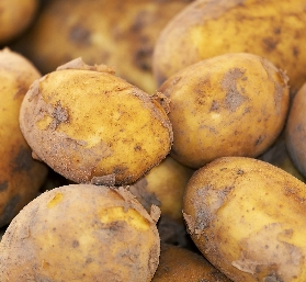 Seed potatoes available at Buckingham Garden Centre