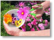 Flower pressing - Buckingham Garden Centre's Junior Gardening Club's Summer project