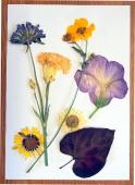 Flower pressing - Buckingham Garden Centre's Junior Gardening Club's Summer project
