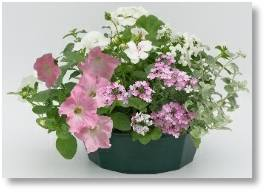 Easi-Planters available at Buckingham Garden Centre