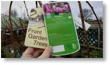 Mature trees are available from Buckingham Garden Centre