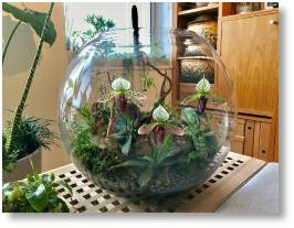 Terrariums and terrarium plants are available at Buckingham Garden Centre