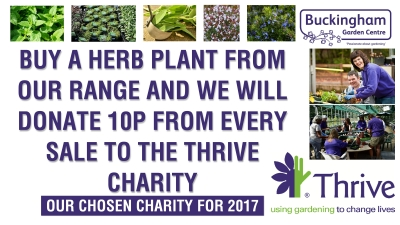 Buy any herb from Buckingham Garden Centre and we will donate 10p per plant to Thrive (our chosen charity for 2017)
