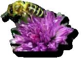 Bees love Ultraviolet!