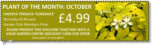 October Plant of the Month offer at Buckingham Garden Centre