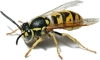 Reliance Pest Management are Buckingham Garden Centre's trusted pest control service provider