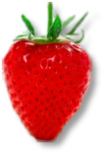 Strawberries available from Buckingham Garden Centre and by Mail Order from hedging.co.uk
