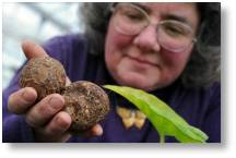 Unusual Vegetables, a talk by Sally Cunningham at Buckingham Garden Centre