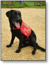 Medical Detection Dog - Alice
