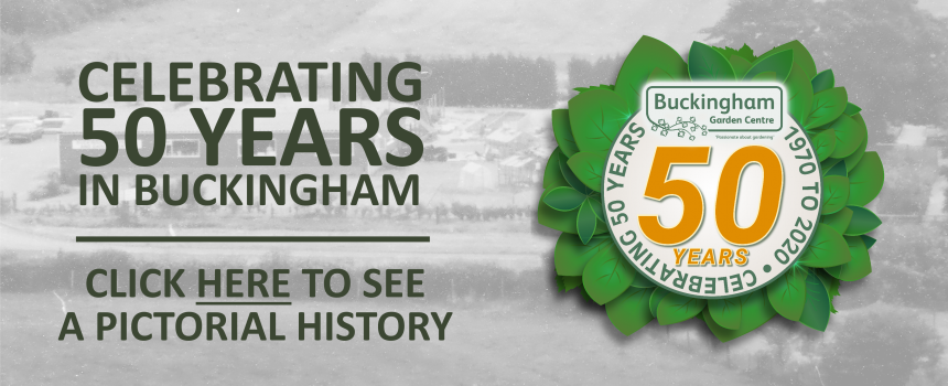 In pictures - 50 years in Buckingham