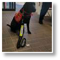 medicaldetectiondog5.jpg